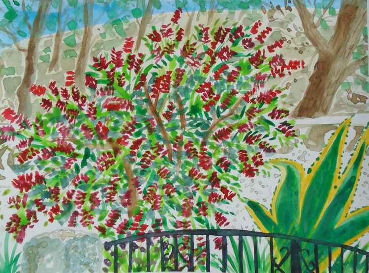 Spanish garden with bottle brush tree