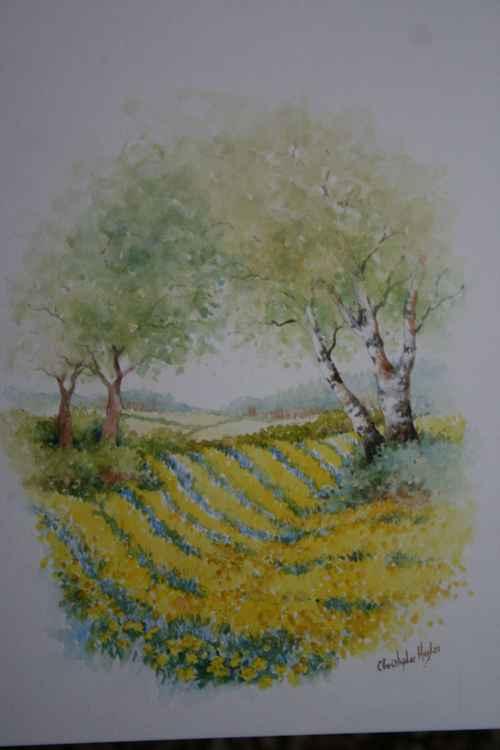 Spring Daffodils -