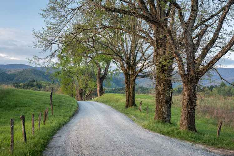 Trees on a Path -