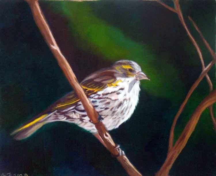 Bird - Serin cini -