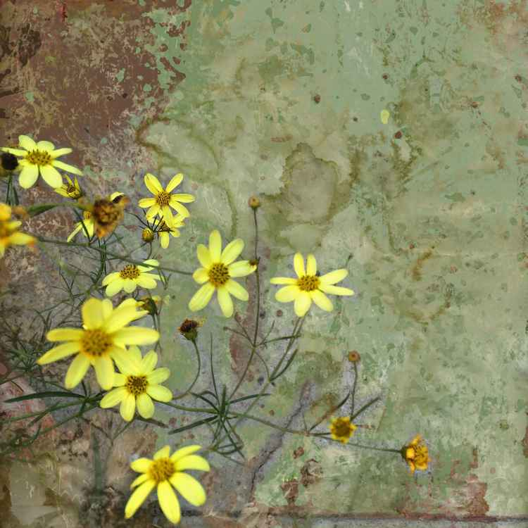 Little Yellow Flowers One -