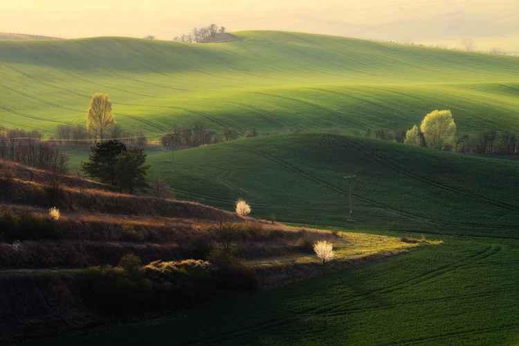 Spring in Moravia -