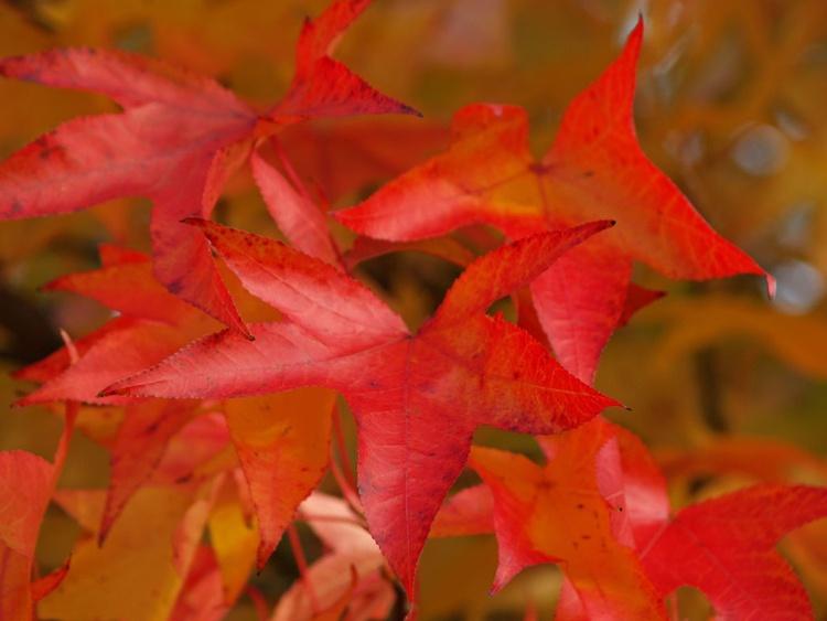 Autumn Glow - Image 0