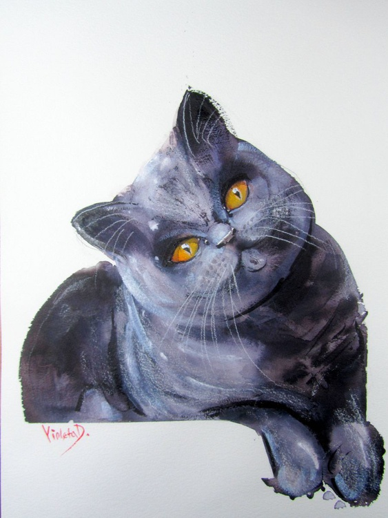 Bluebell the Cat - Image 0