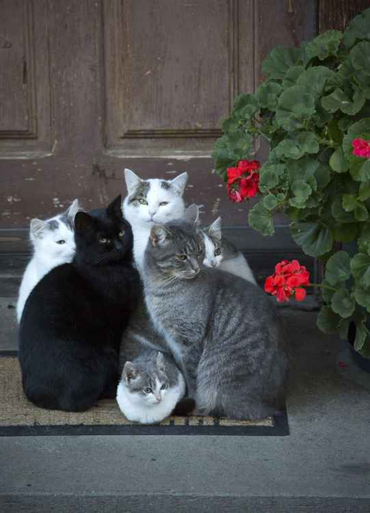 Cats Badkleinkircheim, Austria