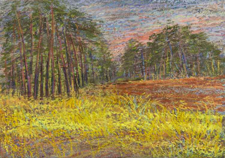 """Pine Forest """"De Hoge Veluwe"""" National Park"""