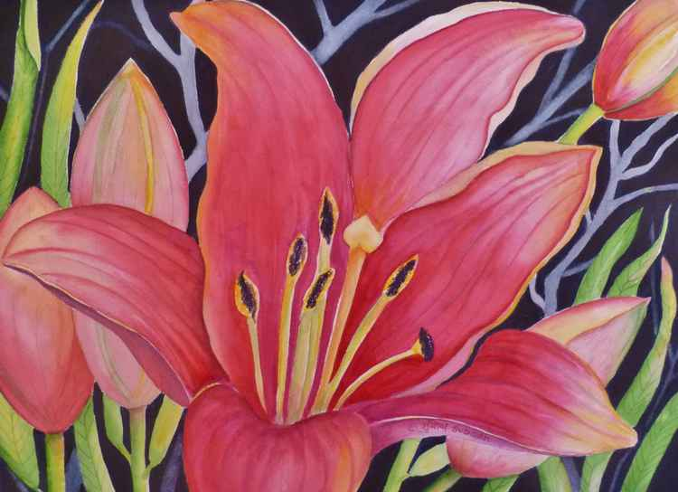 Hot Pink Lily -