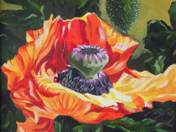 orange poppy - Image 0