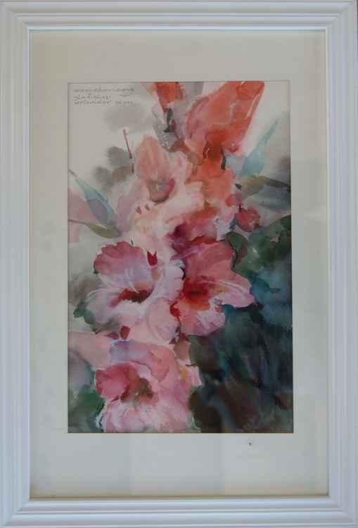 Gladiolus -