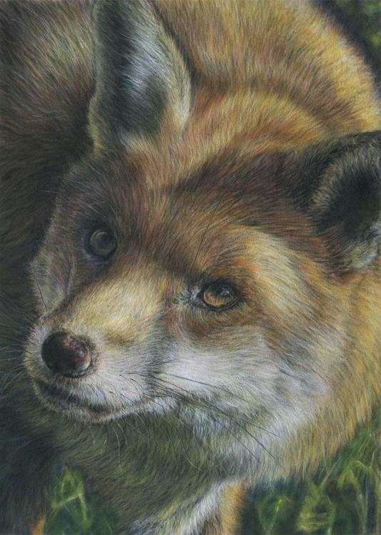 Curious Fox - Image 0