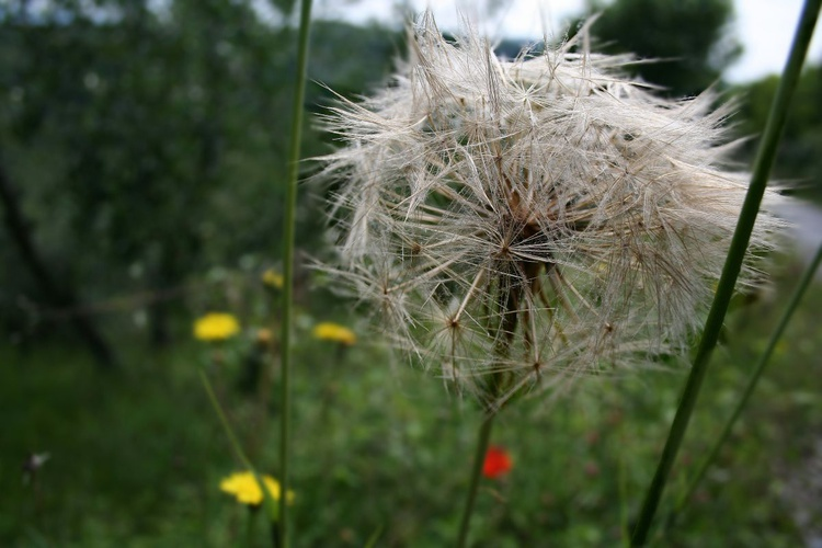 Spring in the field - Image 0