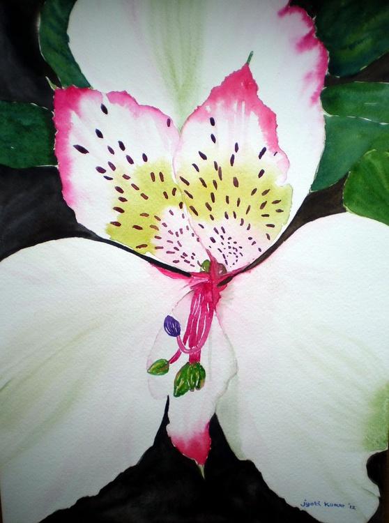 Peruvian Lily - Image 0