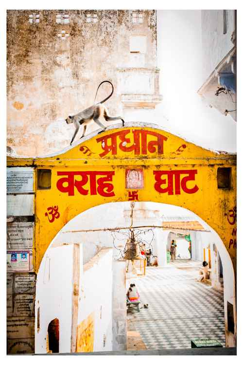 Monkey arch in Pushkar -