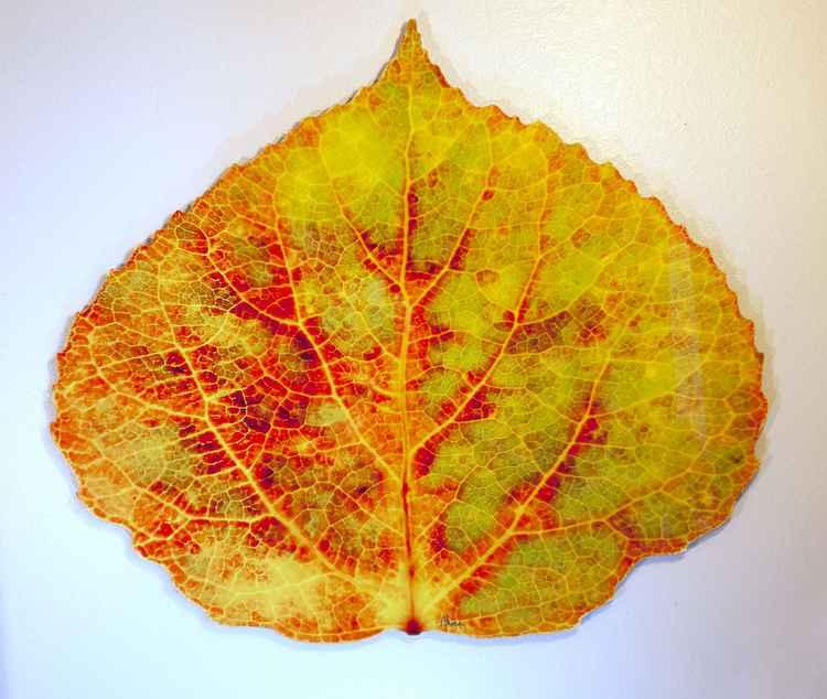 Medium Brown, Green, Orange, Red, & Yellow Aspen Leaf 1