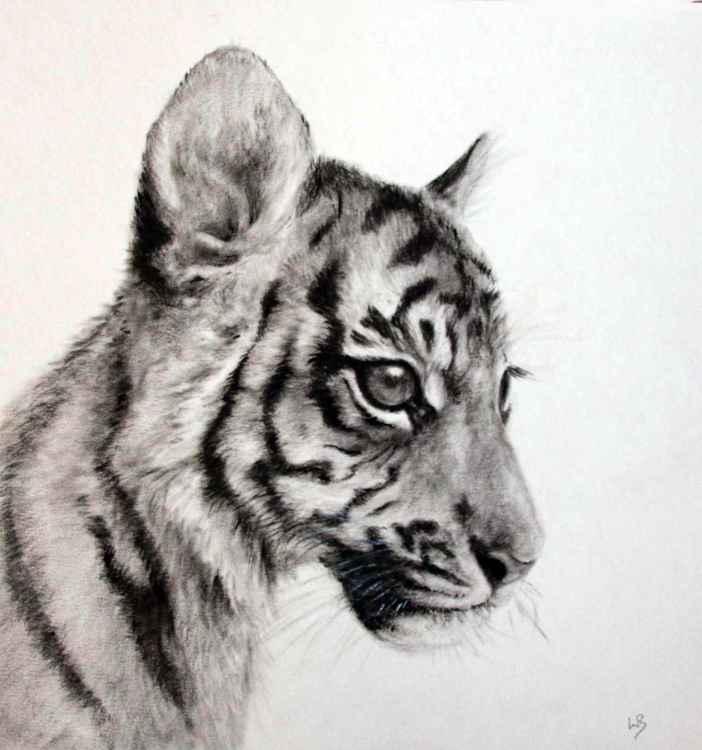 Tiger Cub 3 -
