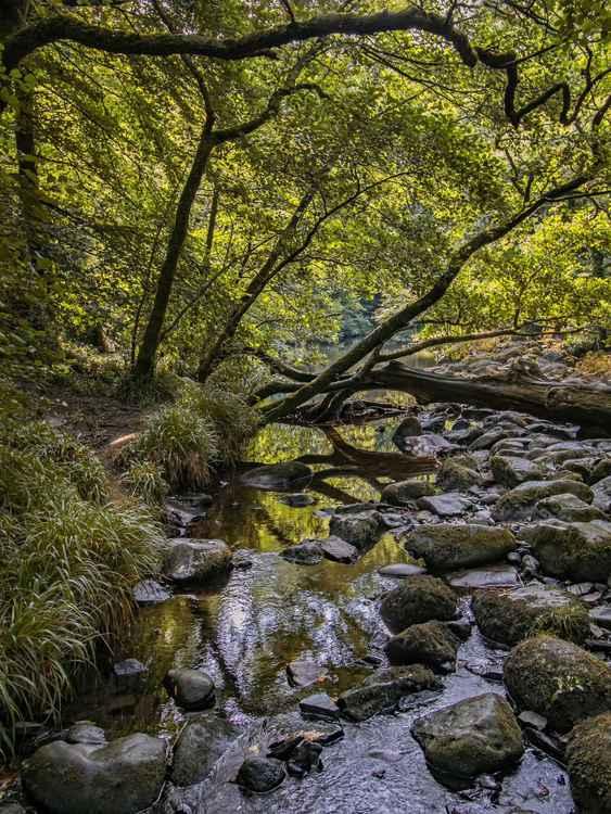 Woodland Journey -