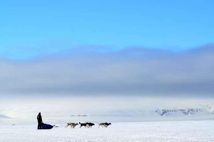 Dogsledding Tempelfjorden