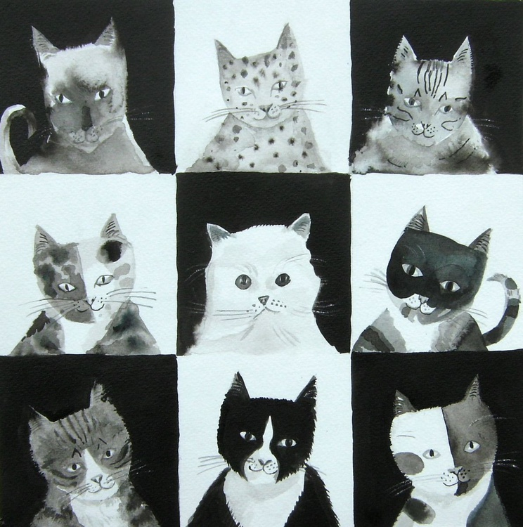 Black and white cats - Image 0