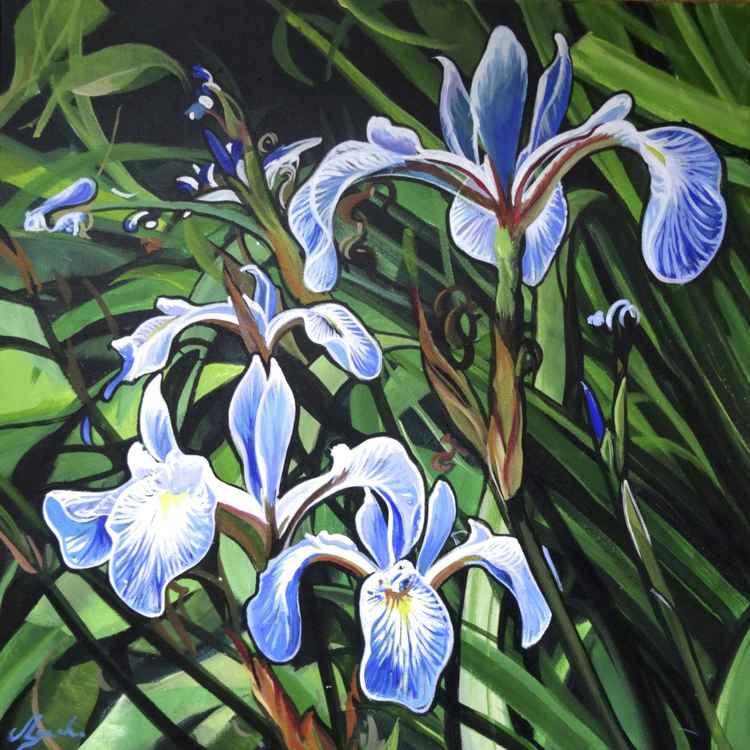 Blue Iris -