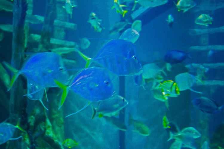 BlueGreen Impression -
