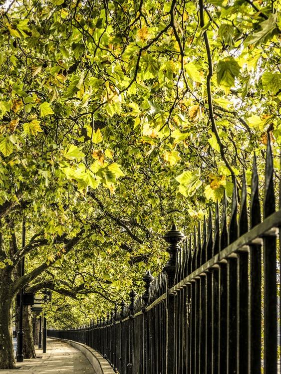 "Autumn Walk LONDON (LIMITED EDITION 2/10) 30"" X 40"" - Image 0"