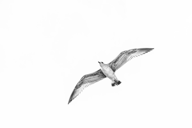 The Seagull - Image 0
