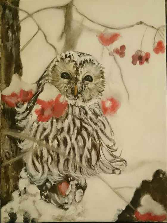 'Snowy Owl' -
