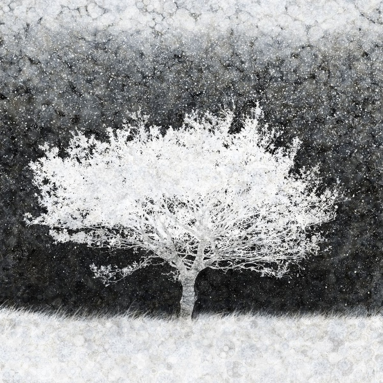 Snow Tree (Ltd Edition of only 20 Fine Art Giclee Prints from original artwork.) - Image 0