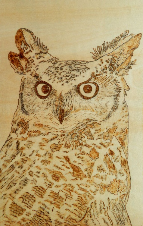 Hoot - pyrography painting depicting a Great Horned Owl, large bird  of prey - Image 0