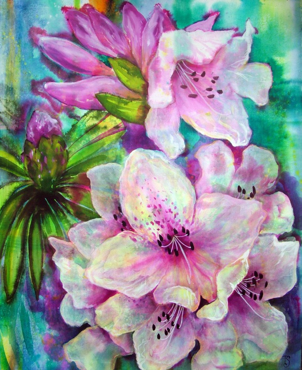 Rhododendron - Image 0