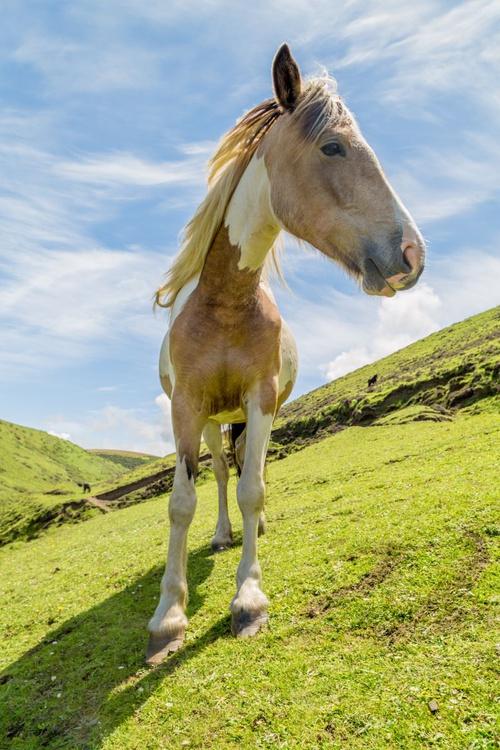 Wild Horse - Image 0
