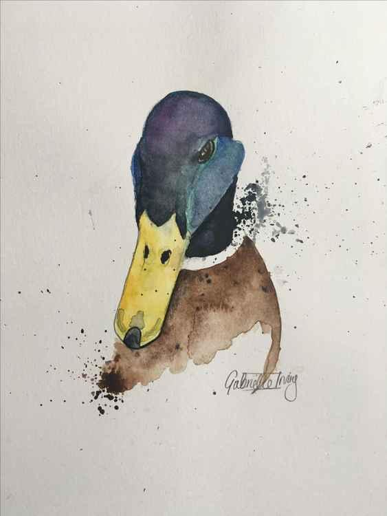 Muddy duck -