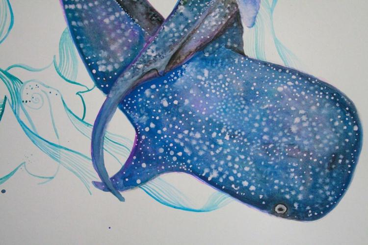 Whale shark - Image 0