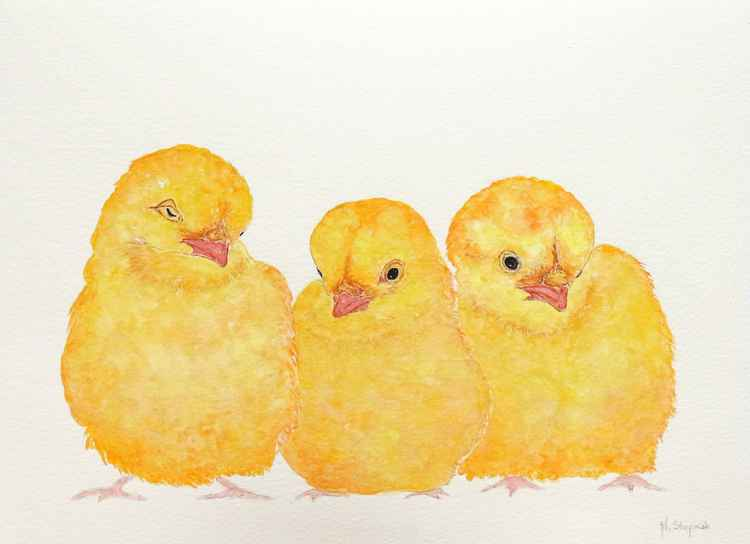 Three chickens -