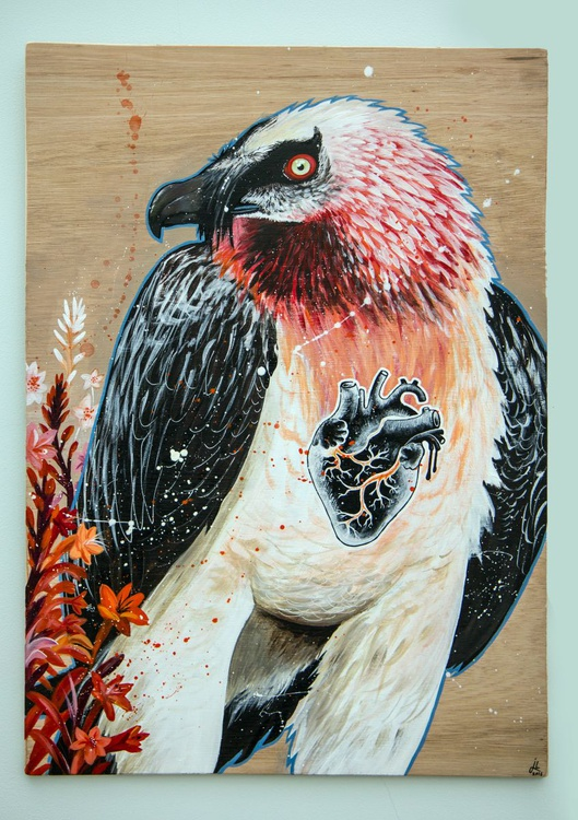 Bearded Vulture - Image 0