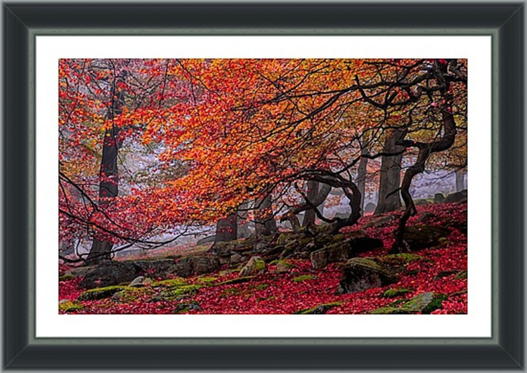 "Deep In The Forest... - 18x12"" Limited Edition Framed Print - Image 0"