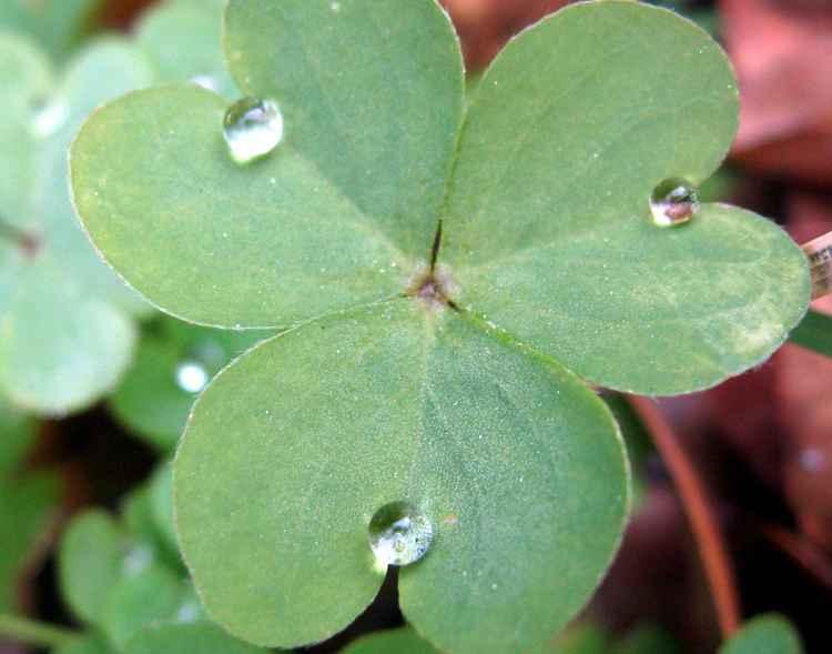 My Lucky Stars -
