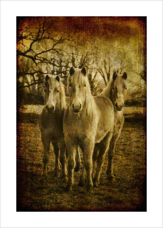 The Ponies -