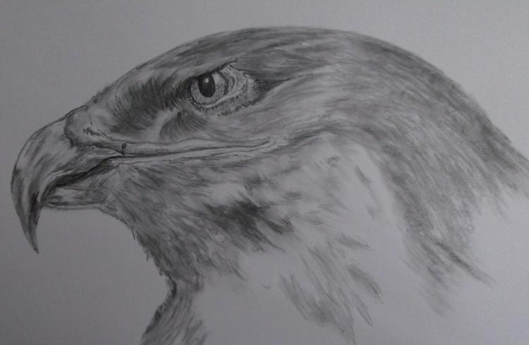 Eagle Eyed. - Image 0