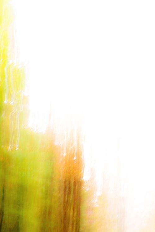 Autumn Abstract #6 - Image 0