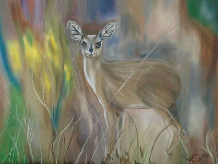 Pudu (smallest deer on Earth) -