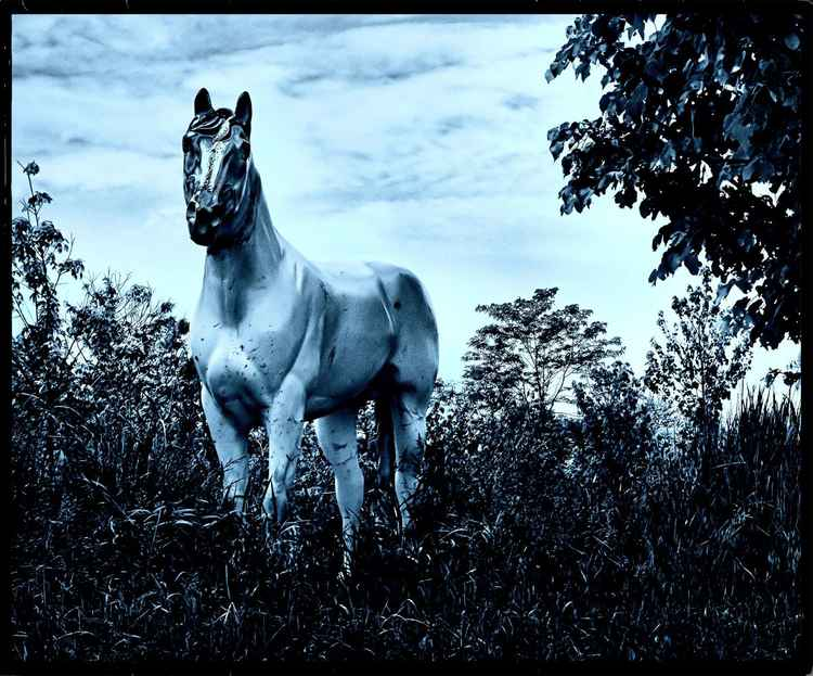BLUE HORSE DREAM -