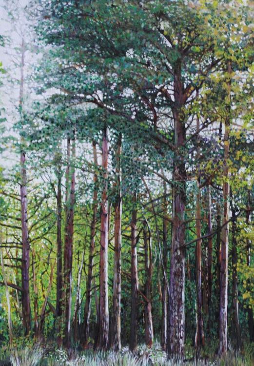 Pine Woods - Image 0