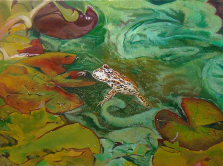 Frog and Water lilies -