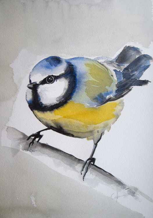 Twitter Series 'Blue Tit 1'
