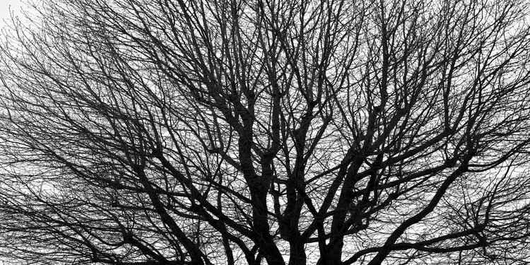 Bare Tree -