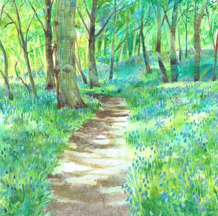 A walk through the Bluebells -