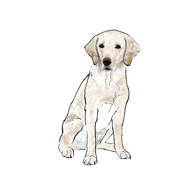 Golden Labrador - Image 0