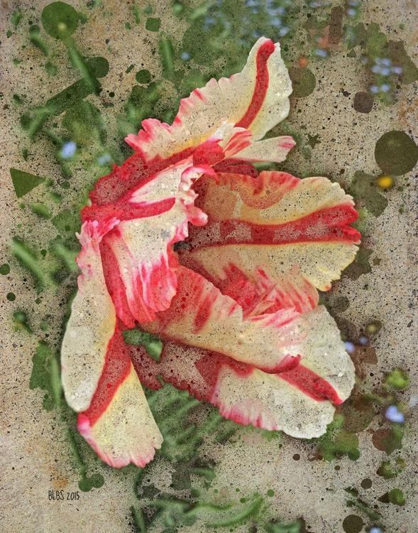Spring Tulip - Image 0