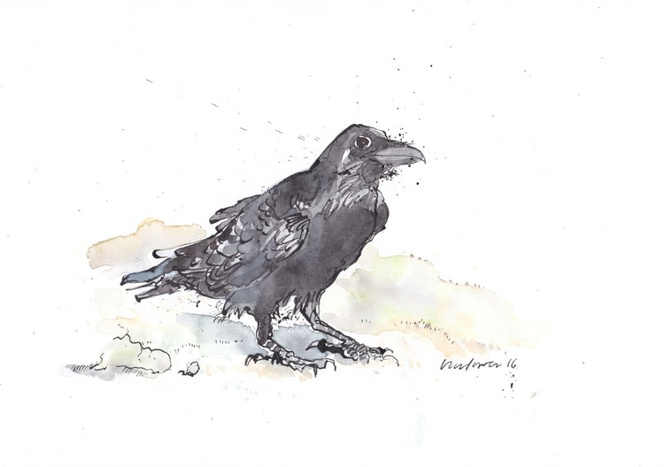 Raven waiting - Daily Bird #20 - Image 0